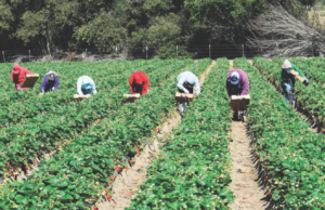 farm_workers_credit_rightdxshutterstock