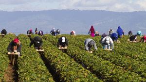 MAC18_FARM-WORKERS_POST01